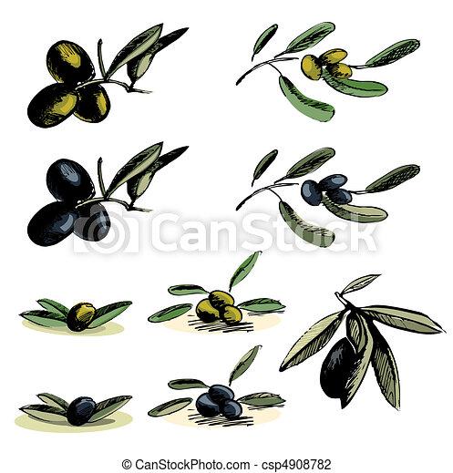 illustraties, olive - csp4908782