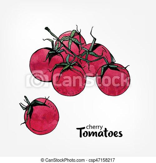 Illustration Colore Tomates Cerise Main Aquarelle Branche