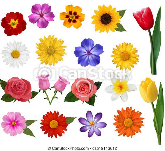 Una gran colección de flores coloridas. Ilustración de vectores. - csp19113612