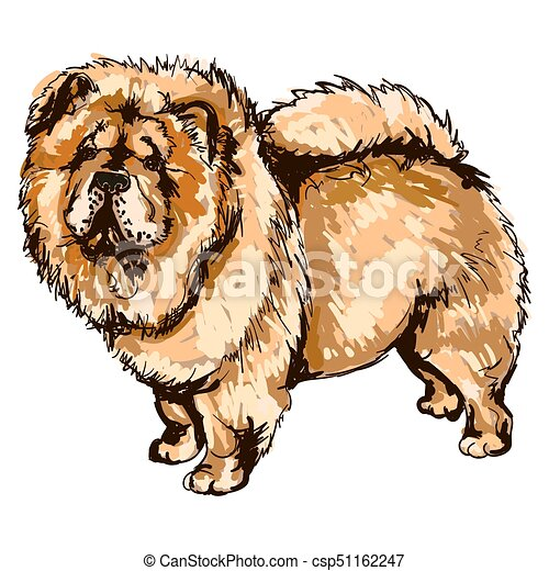 Illustration Of Dog Breed Chow Chow Vector Colorful Illustration
