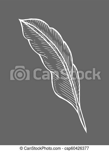 illustration of feather - csp60426377