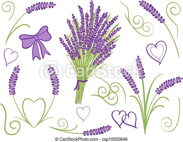 Illustration of lavender design elements - csp10550646