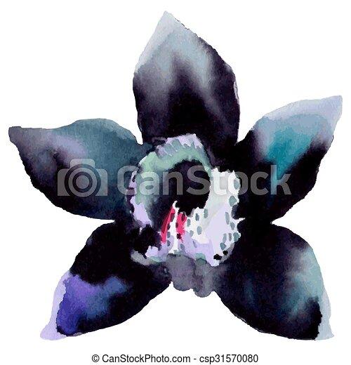 Illustration of orchid flower - csp31570080