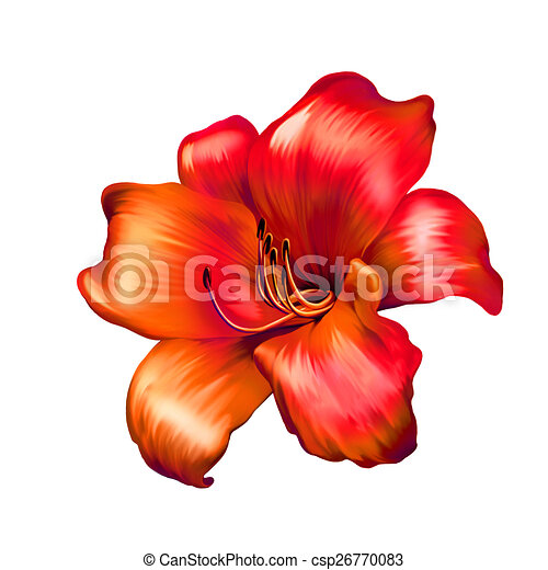 illustration of red lily flower isolated on white