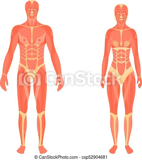 Vector Medical 3d Illustration Of The Male And Female Vector