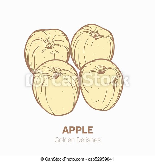 Illustration set of drawing apples Golden delicious elements. Hand draw illustration set for design. - csp52959041