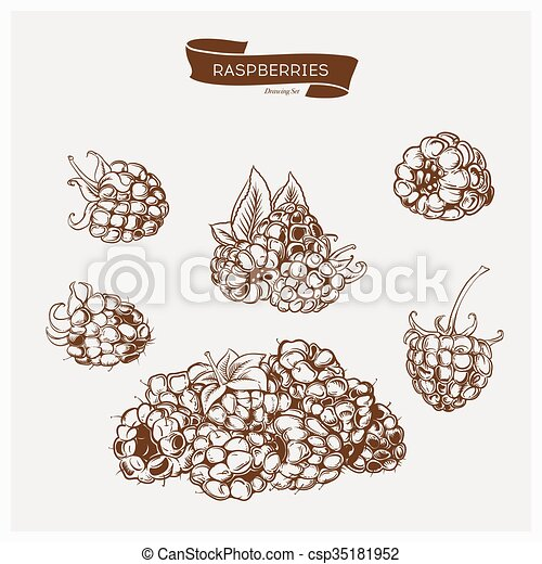 Illustration set of drawing raspberry. Hand draw illustration set for design. - csp35181952