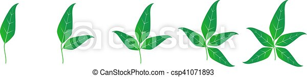 Illustration template with set of green leaves. - csp41071893