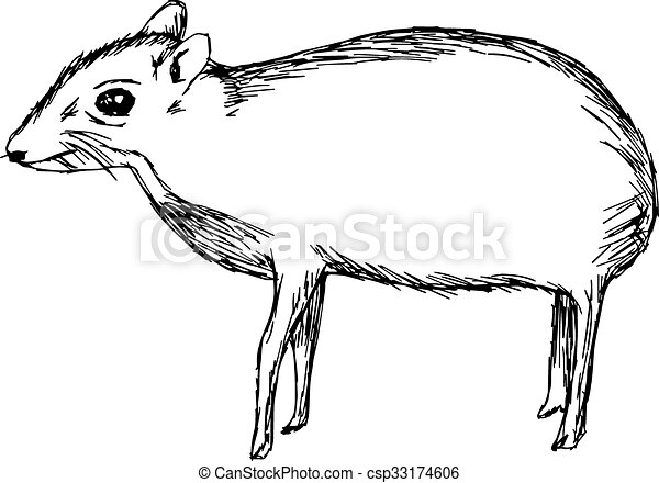 illustration vector hand drawn doodle the mouse deer or Chevrotain isolated on white. - csp33174606