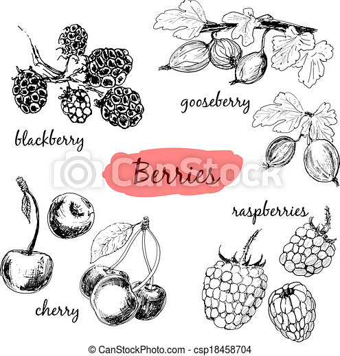 illustrationer, berries., sätta - csp18458704