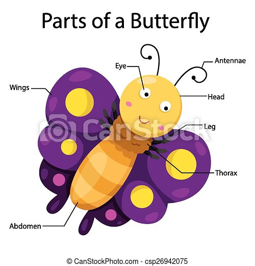illustrator parts of a butterfly vectors illustration search rh canstockphoto com illustrator clip art ship illustrator clip art files