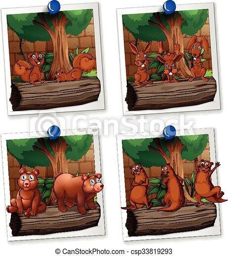 image, fourrure, brun, quatre, cadres, animaux - csp33819293