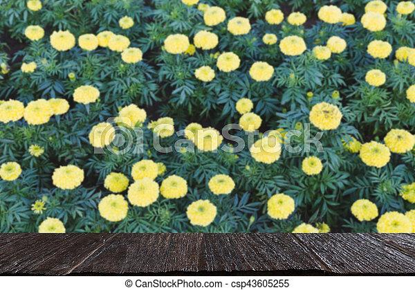 Image), jardin fleur, sélectionné, foyer, (blur, exposer, produit ...