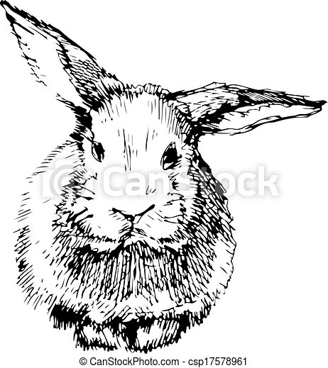 image of a rabbit with long ears - csp17578961