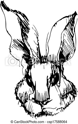 image of a rabbit with long ears - csp17588064