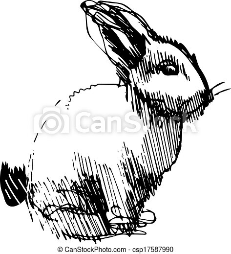 image of a rabbit with long ears - csp17587990
