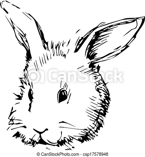 image of a rabbit with long ears - csp17578948