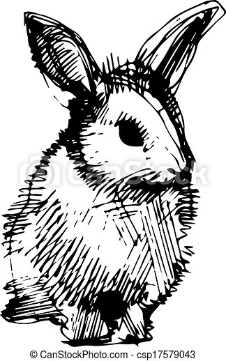image of a rabbit with long ears - csp17579043