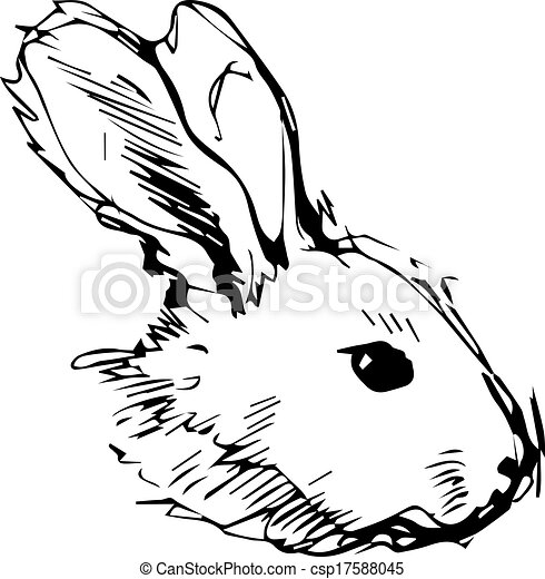 image of a rabbit with long ears - csp17588045