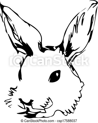 image of a rabbit with long ears - csp17588037