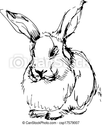 image of a rabbit with long ears - csp17579007