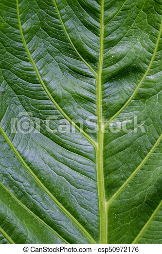 Image of background texture of green leaves for your design. - csp50972176