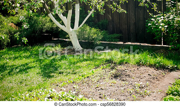 Image of beautiful backyard garden with fertile soil - csp56828390