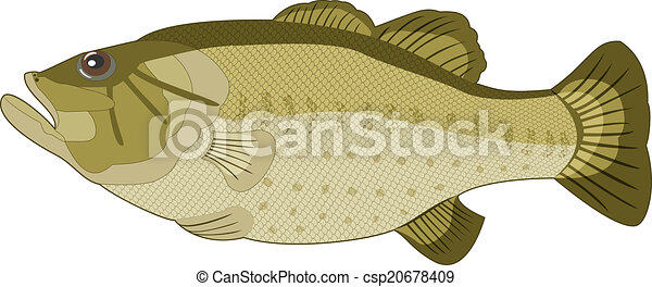Image of fish on a white background. Vector - csp20678409