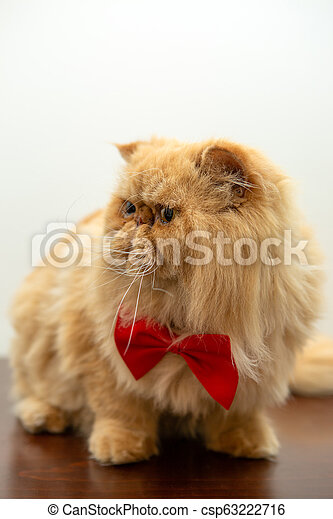 Image of ginger cat in red bow tie sitting - csp63222716