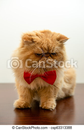 Image of ginger cat in red bow tie sitting - csp63313388