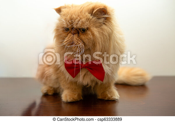 Image of ginger cat in red bow tie sitting - csp63333889