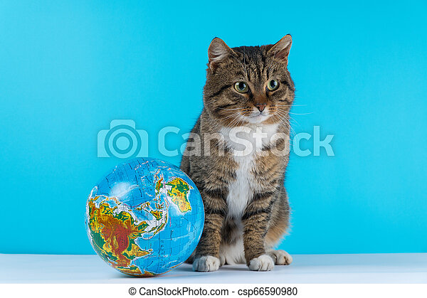 Image of playful white cat looking at globe in studio - csp66590980