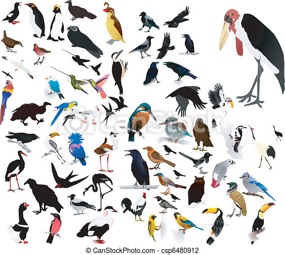 imagens, pássaros - csp6480912
