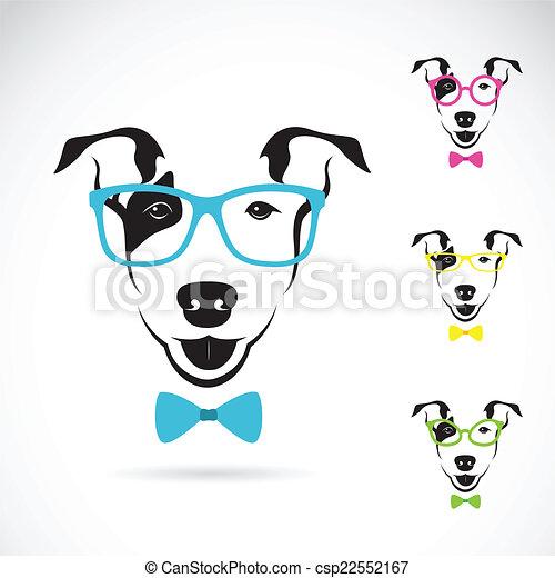immagine, cane, terrier), vettore, fondo, bianco, (bull, occhiali - csp22552167