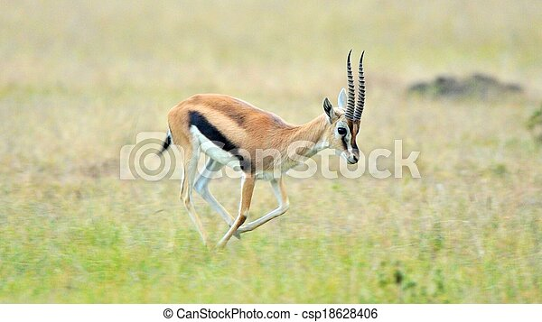 impala in Tanzania national park - csp18628406