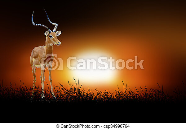 Impala on the background of sunset - csp34990764