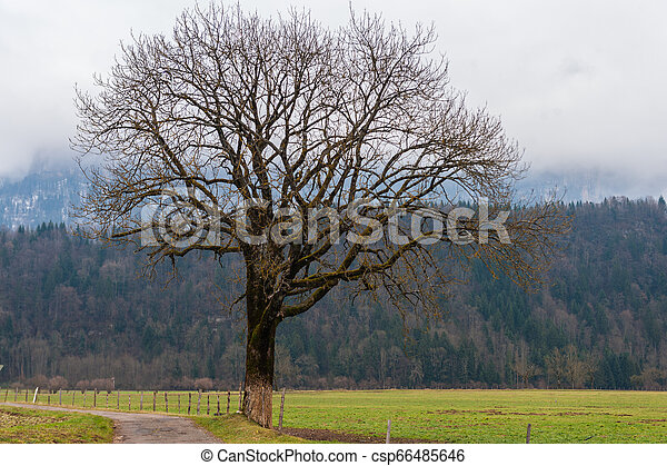 Impression of the Country side in the French Savoy Area - csp66485646