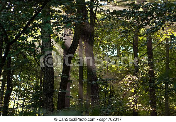 In the forest - csp4702017