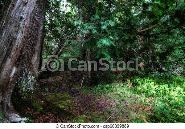 In the forest - csp66339889