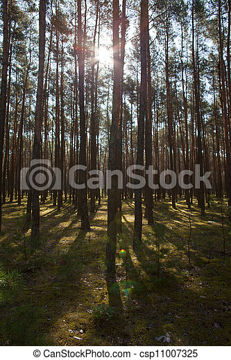 in the forest - csp11007325