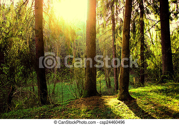 in the forest - csp24460496