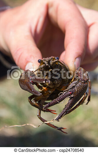 in the hands of crayfish - csp24708540