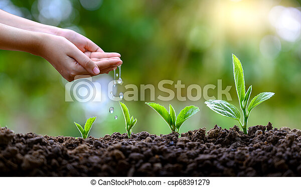 In the hands of trees growing seedlings. Bokeh green Background Female hand holding tree on nature field grass Forest conservation concept - csp68391279