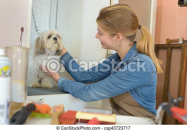 in the pet salon - csp43723717