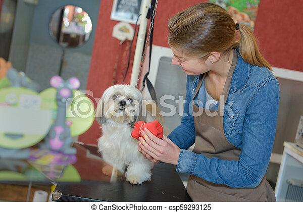 in the pet salon - csp59293125