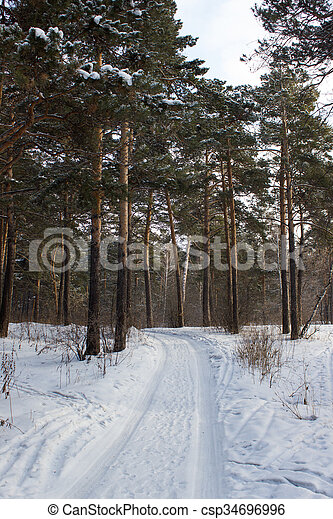 In winter forest, Tree branches under the snow - csp34696996