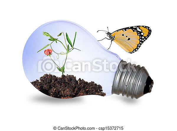Incandescent light bulb with a plant - csp15372715