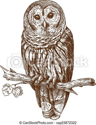 incisione, gufo, illustrazione - csp23872322