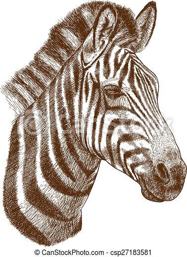incisione, testa, zebra - csp27183581