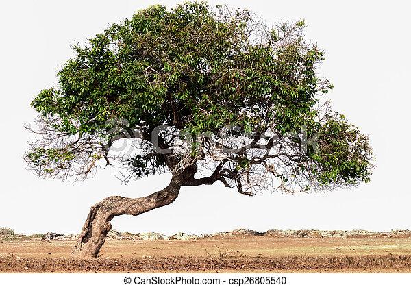 inclinação, árvore - csp26805540